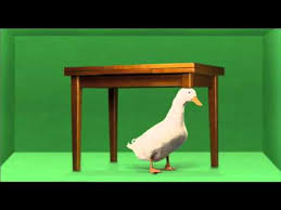 duck wife